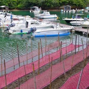 ボートハーバの近くまで海苔網が