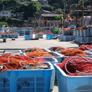 埠頭は海老網がいっぱい