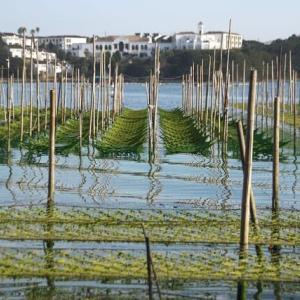 海苔の海と都リゾート志摩ベイサイドテラス