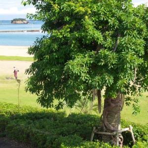 椰子にまとわり着いた着生樹木