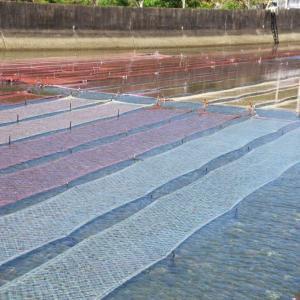 迫子川の海苔網風景