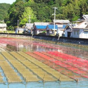 干上がり掛かった海苔網