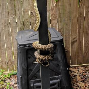 雨の後のヘビと毒キノコに注意!