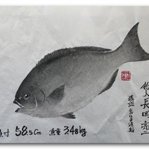 尾長グレの魚拓