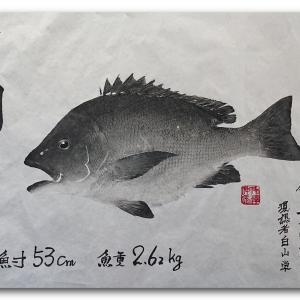 笛鯛の魚拓