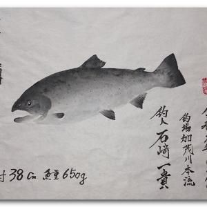 皐月鱒の魚拓