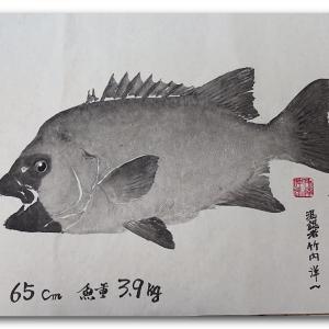 石鯛の魚拓
