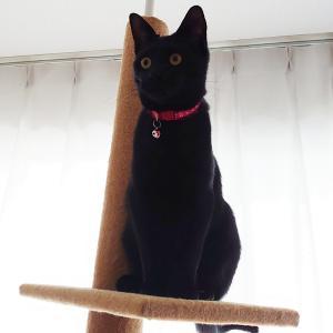 うちの猫さん