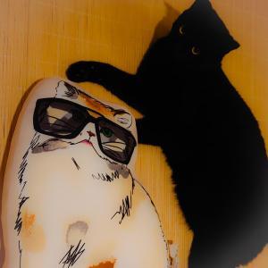 UNIQLO PAUL and JOE コラボのネコさんが来ました