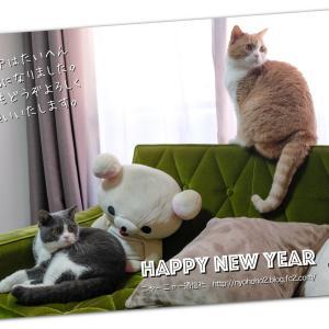 平成最後のお正月。