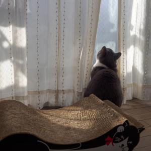 仲良くケンカするネコとネコ。