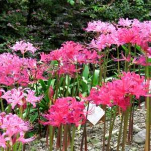 秋だよ~! 京都府立植物園