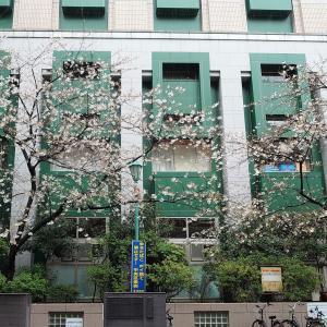 昼の桜と夜の桜