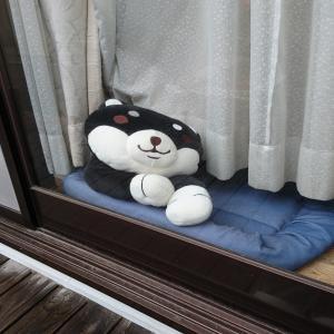 窓の外は雨・・・