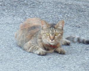 沿線徒歩旅 今日の猫(山陽本線)