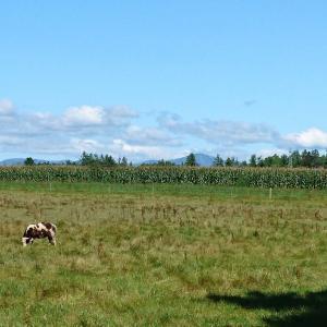プロフェッショナル仕事の流儀に羊牧場さんが登場です