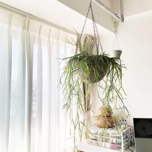 伸びた植物とファイザー2回目