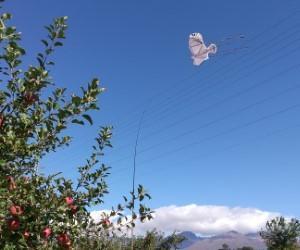 りんご園の近況