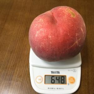 今年一番の白桃