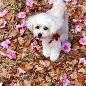 新型コロナウイルスは犬に感染する?
