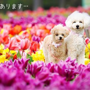 犬と母の面会も がまん!