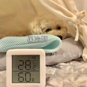 わんこのいる部屋の温度管理に便利