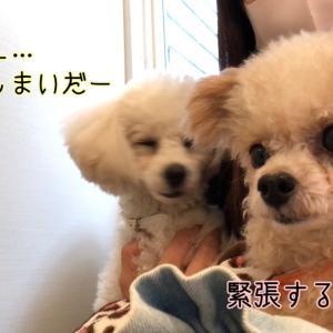 犬の歯 歯周病手術②