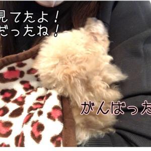 犬の歯 歯周病手術③