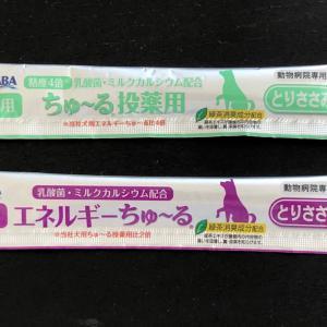 犬の歯 歯周病手術④