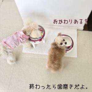 犬の歯 歯周病手術⑤