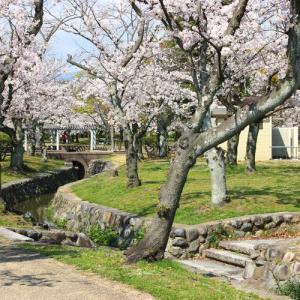 西武庫公園と武庫川土手のさくら