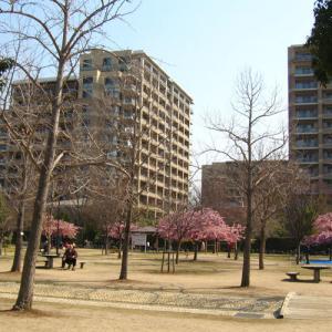 笹原公園のカワヅザクラ