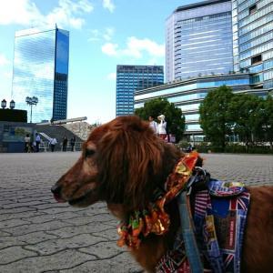 日曜散歩は大阪城へ