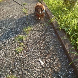 暑い夏休み~ご近所散歩