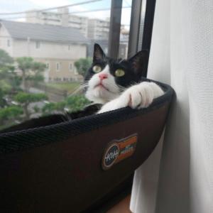ウィンドウベッドでくつろぎタイム☆