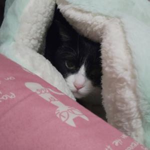 えだまめベッドに入った♪