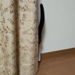 隠れているようで見えてます!