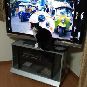 テレビの前へ…!