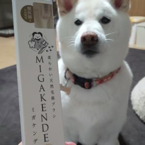 ヤギと馬の毛ハブラシ☆
