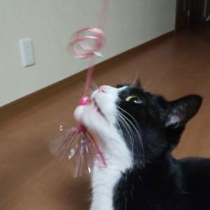 新しいおもちゃ☆