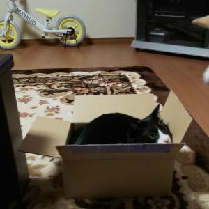 箱が小さすぎた!