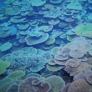 沖縄の海がエメラルド・グリーン!