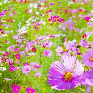 秋のお花畑