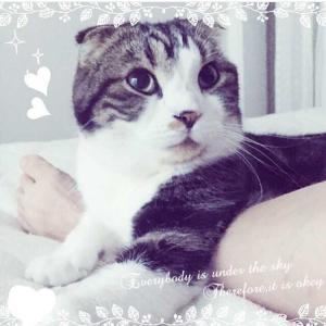 猫のタイの日常・主になって5回目の秋(=゚ω゚)ノ