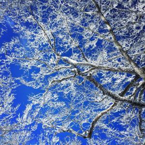 ▲赤城山・霧氷と青空と富士山/百名山/群馬県/2020年1月