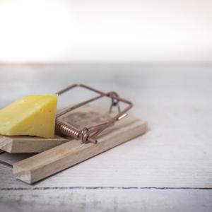 窮鼠はチーズの夢を見る