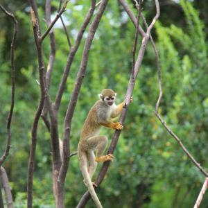 猿でなくても木から落ちる
