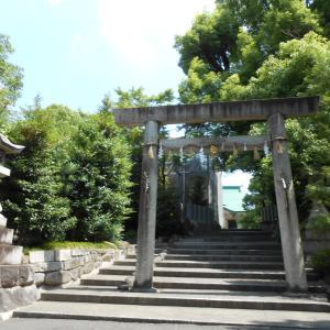 サカキの白い花咲く白山神社