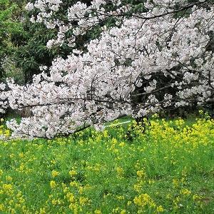 春一番が・・!
