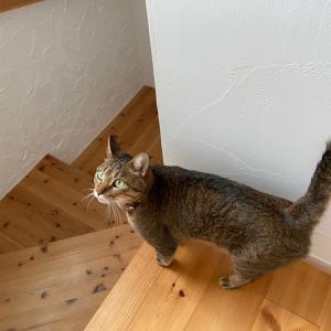【我が家の日常】こんなはずじゃ…末っ子がやんちゃで猫が脱走しまくり!